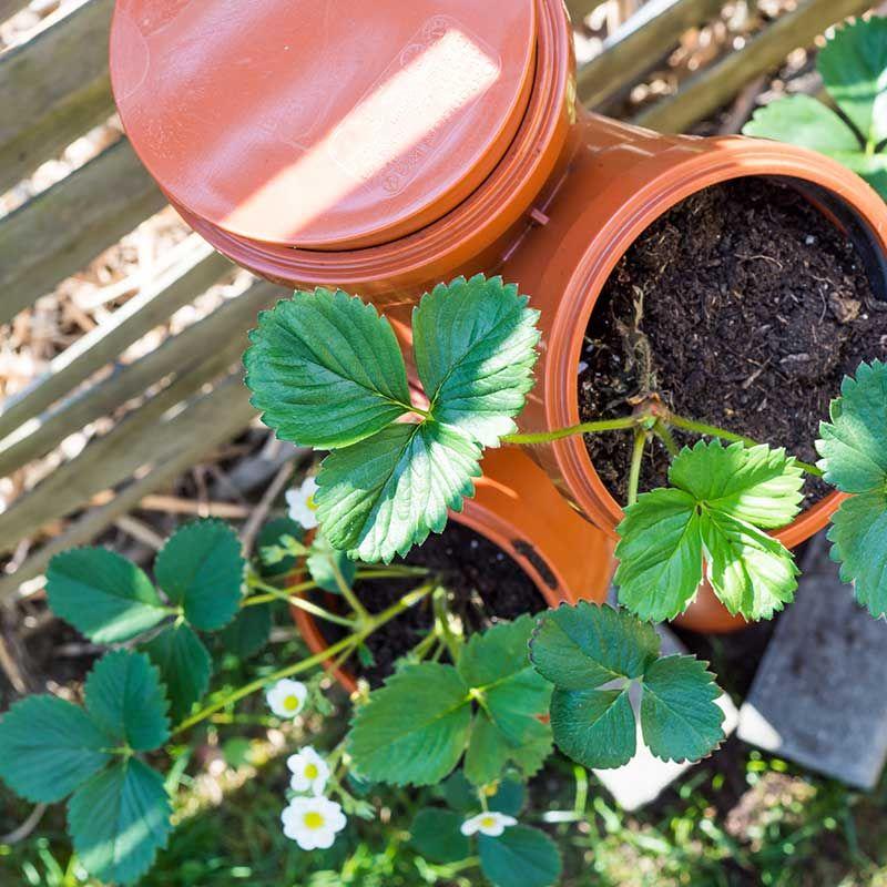 Erdbeerturm Selber Bauen In Nur 4 Schritten Zur Diy Erdbeersaule Erdbeerturm Garten Hochbeet Pflanzen