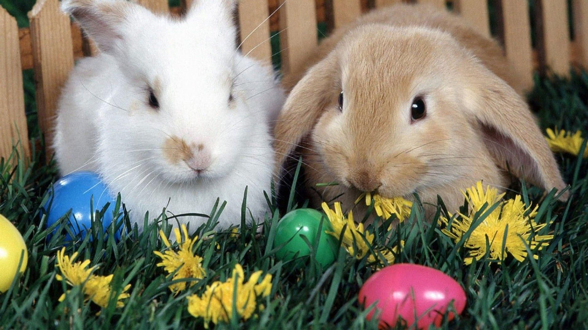 Easter Bunny Wallpaper Free Download Cute Easter Pictures Easter Wallpaper Easter Bunny Images