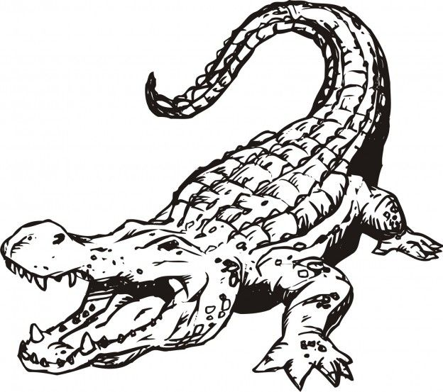 Free Printable Alligator Coloring Pages For Kids | Cocodrilos ...