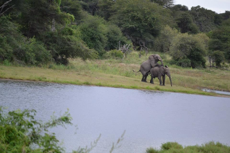 Olifanten - Kruger national parc
