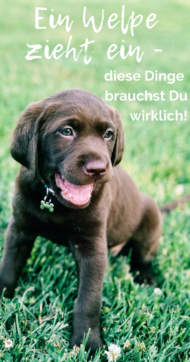 Erstausstattung Welpe Das Brauchst Du In 2020 Welpen Hunde