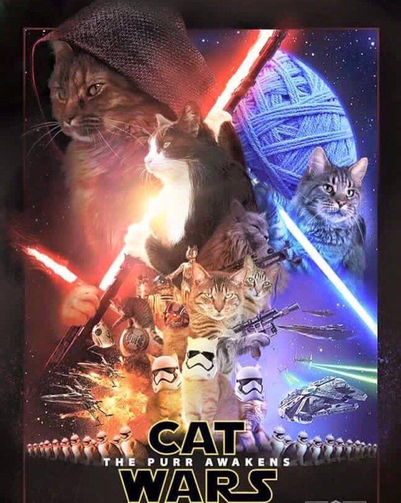 Pin By Camille Edgar On Cute Star Wars Humor Star Wars Memes Star Wars