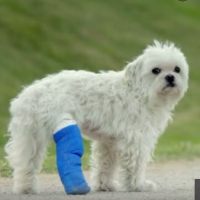 Watch Dog In A Cast Amazon Prime Cermercial And It Will Make Your Eyes Tear Up Dogs Dog Day Afternoon Pets