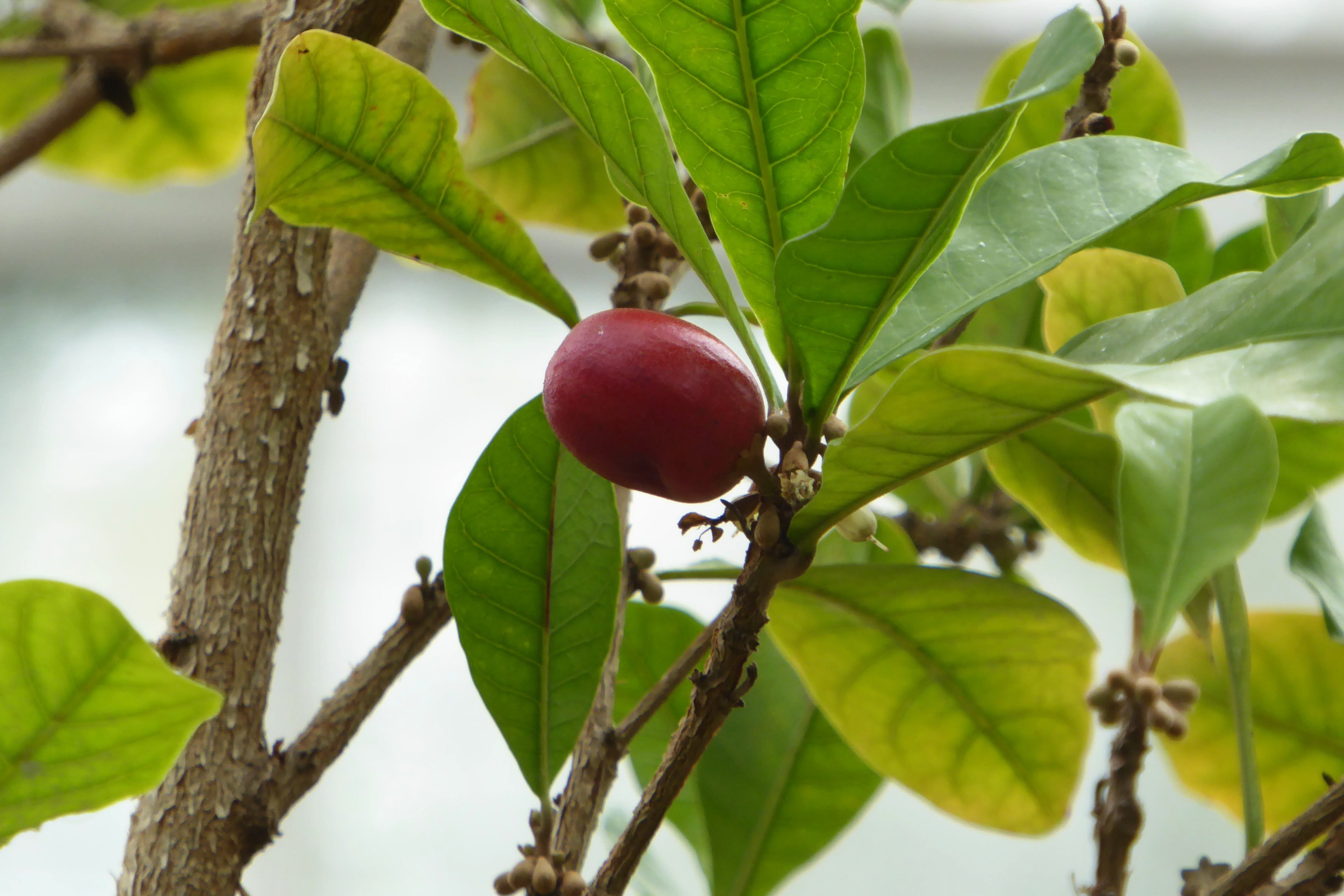Pin On Plants Used For Medicine And Aids