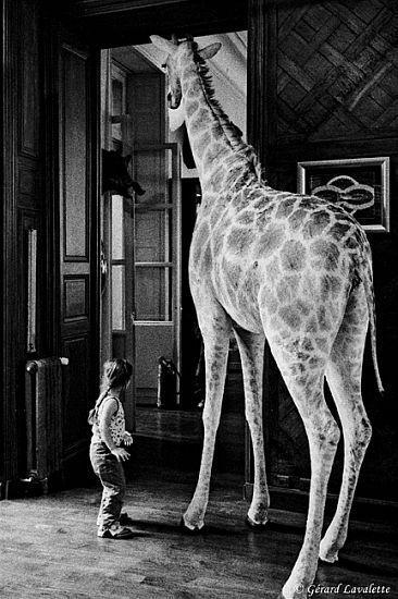 Une Girafe Chez Deyrolles Gerard Lavalette Animaux Naturalises Girafes Animaux