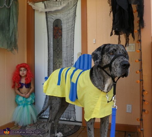 Great Dane Flounder Halloween Costume Contest At Costume Works