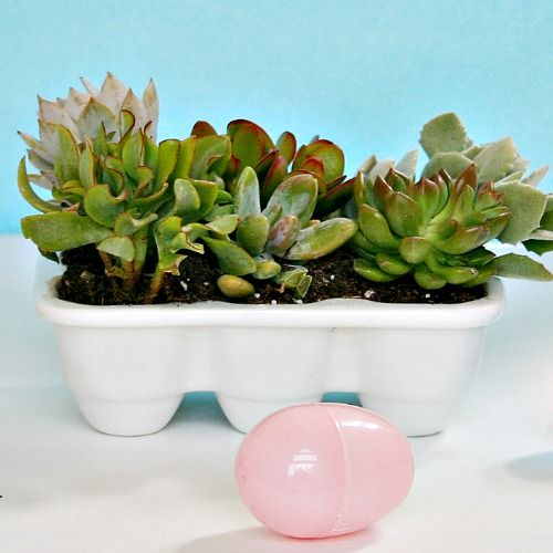 This easter hostess gift keeps on giving easter succulents in a ceramic egg crate make a great hostess gift for easter negle Images