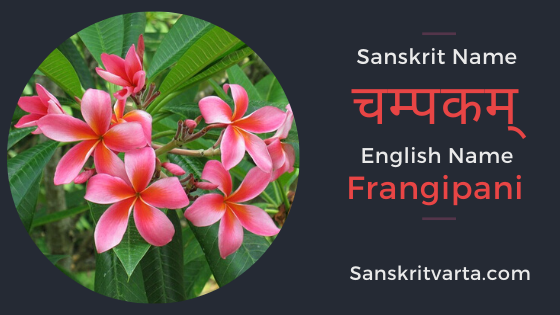 50+ List of Flowers Name In Sanskrit Language And Hindi