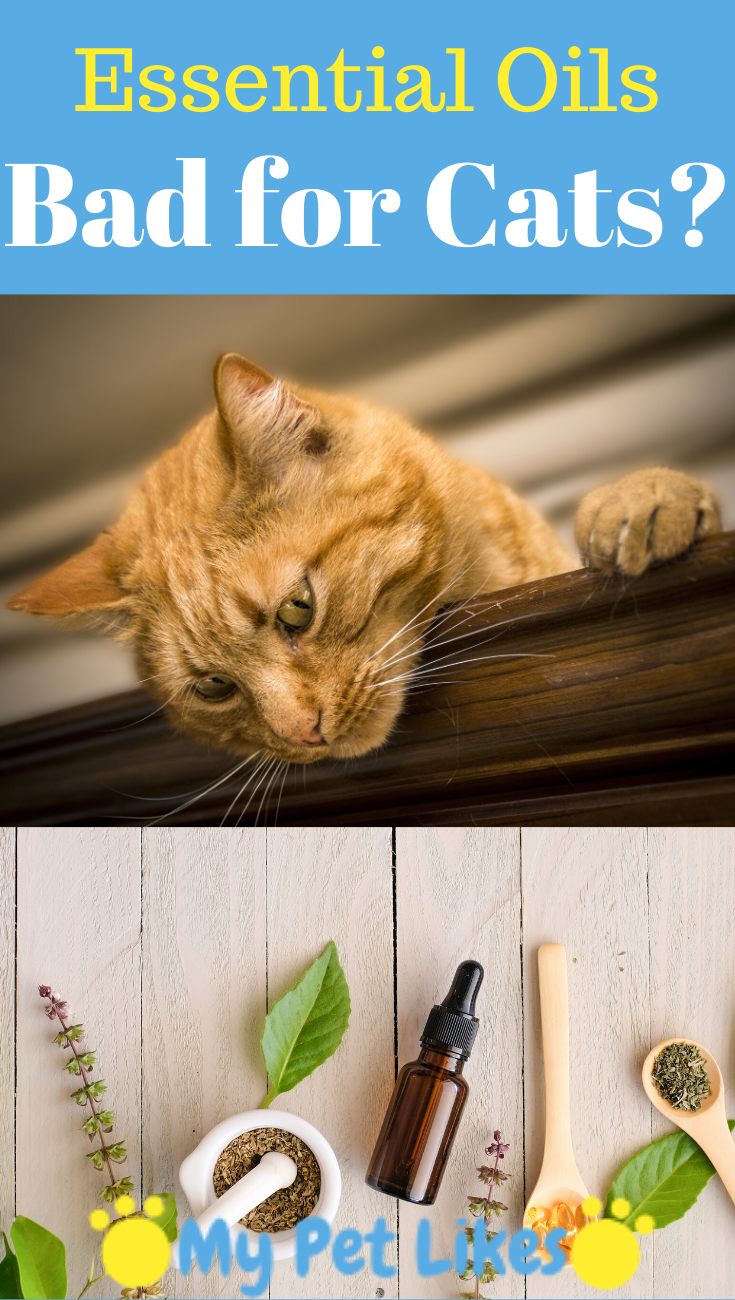 Are Essential Oils Bad for Cats? Essential oils cats