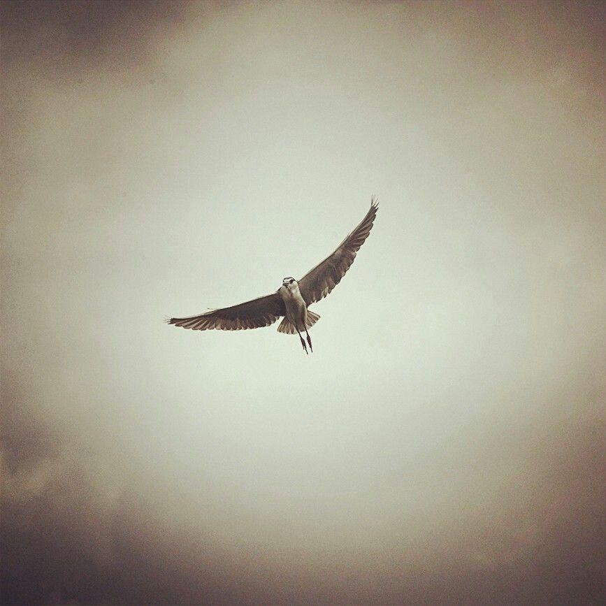 De Bird