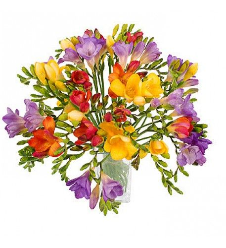 As Well As Being A Symbol Of Sweetness Friendship And Trust Freesias Make A Perfect Ch Purple Flower Bouquet Congratulations Flowers Same Day Flower Delivery