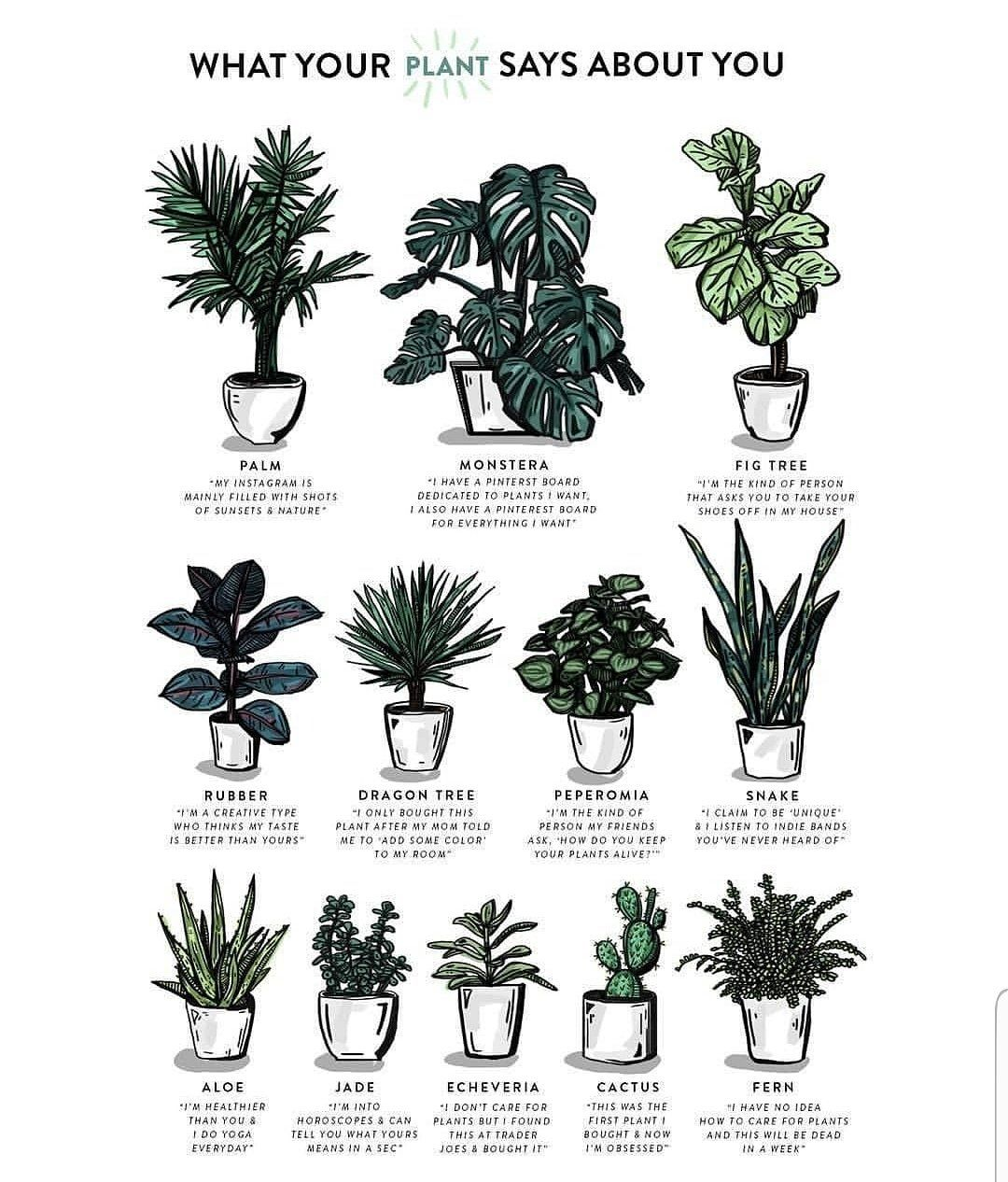 28+ What temperature should i bring my plants inside information