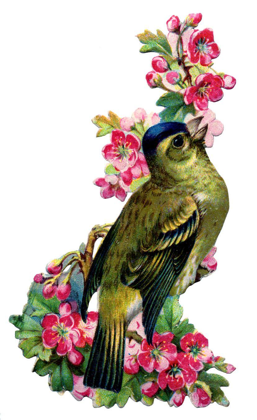 birds+and+flowers+vintage+image+graphicsfairy2b.jpg 828×1.350 piksel