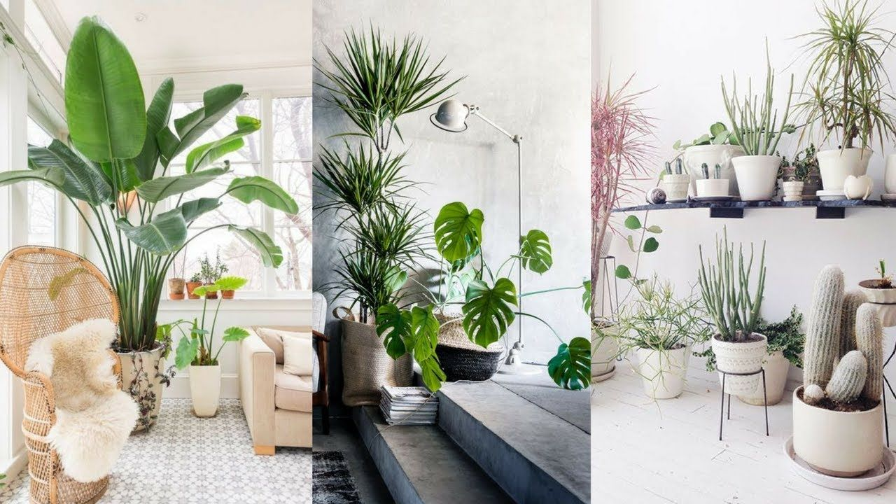 Plant Trends For Inside Indoor Plants Ideas 25 Best Indoor Plants Ideas Simple Ways To Decorate With H Plant Decor Indoor Plant Decor Popular House Plants