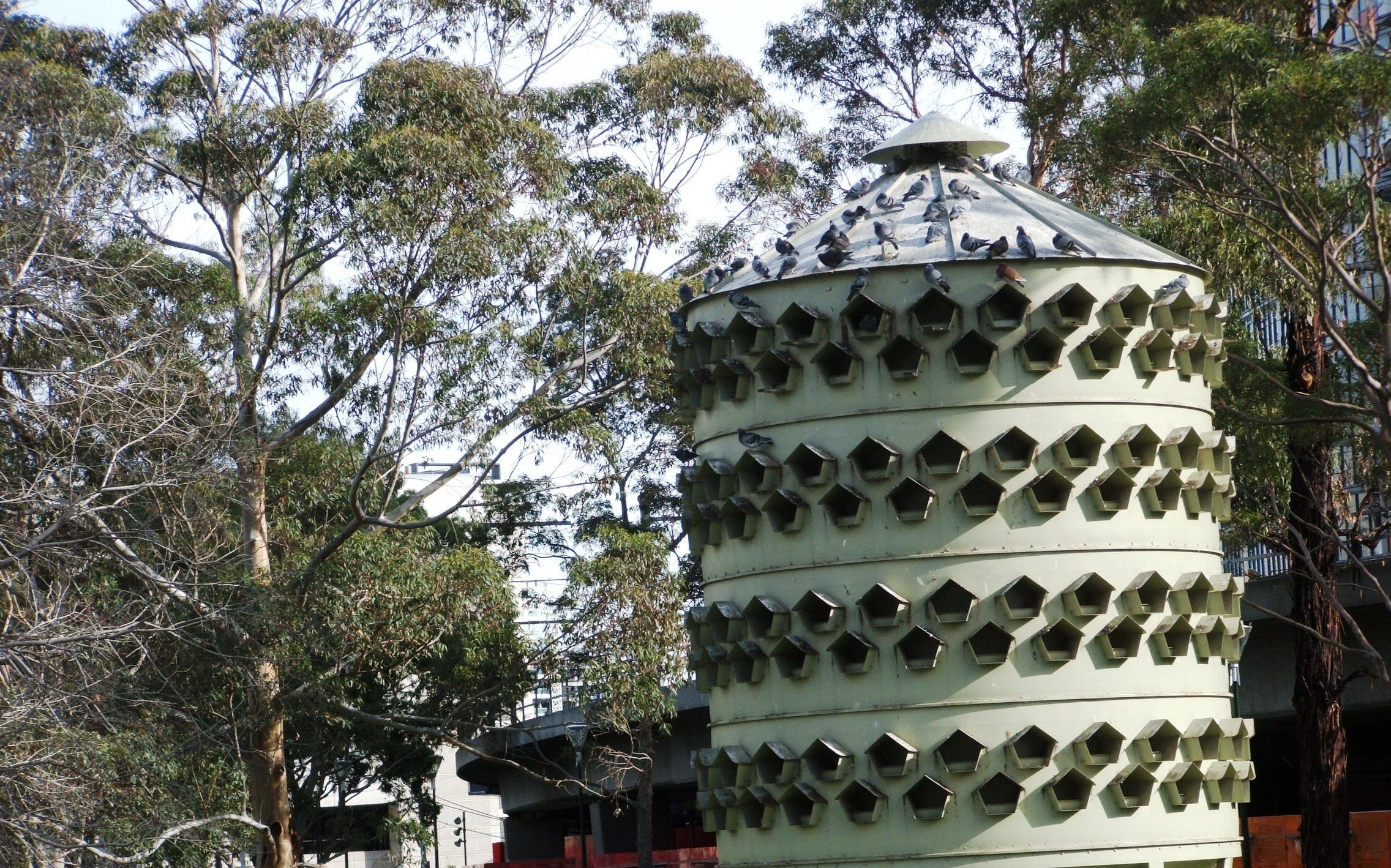 Birdhouse Largest One I Ve Seen Melbourne Aust Bird Houses Leaning Tower Of Pisa Leaning Tower