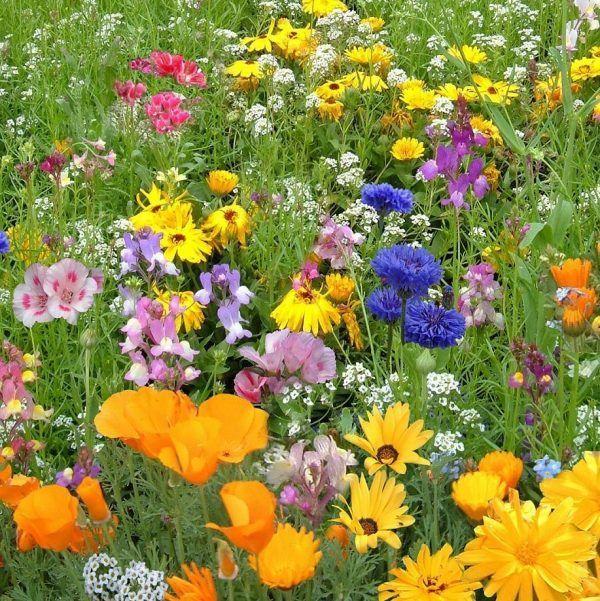 Meadow Flowers Australia Wildflower Seed Mixes Flowers