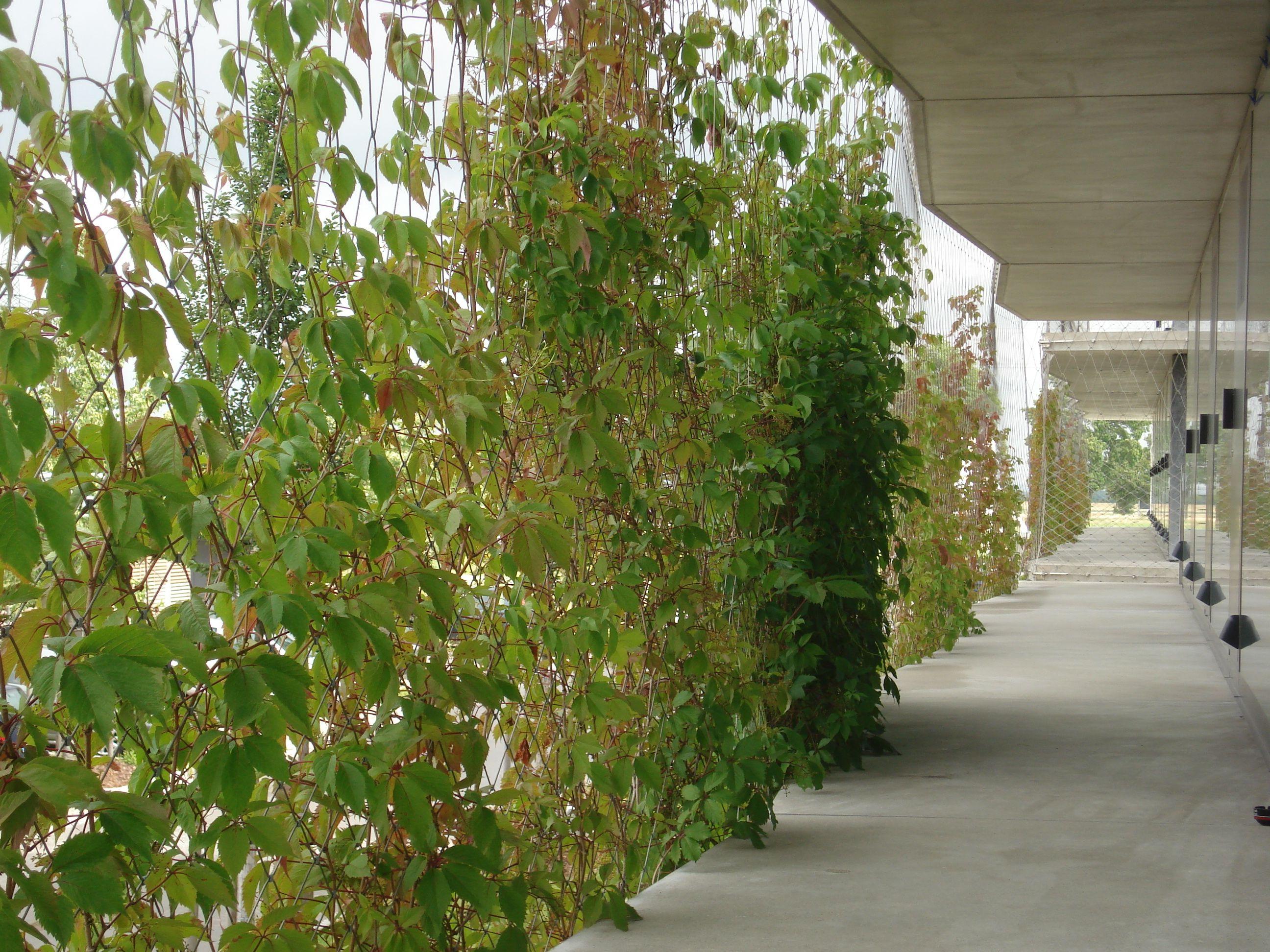 Pin von R L auf Green Walls Landscape Architecture   Pinterest