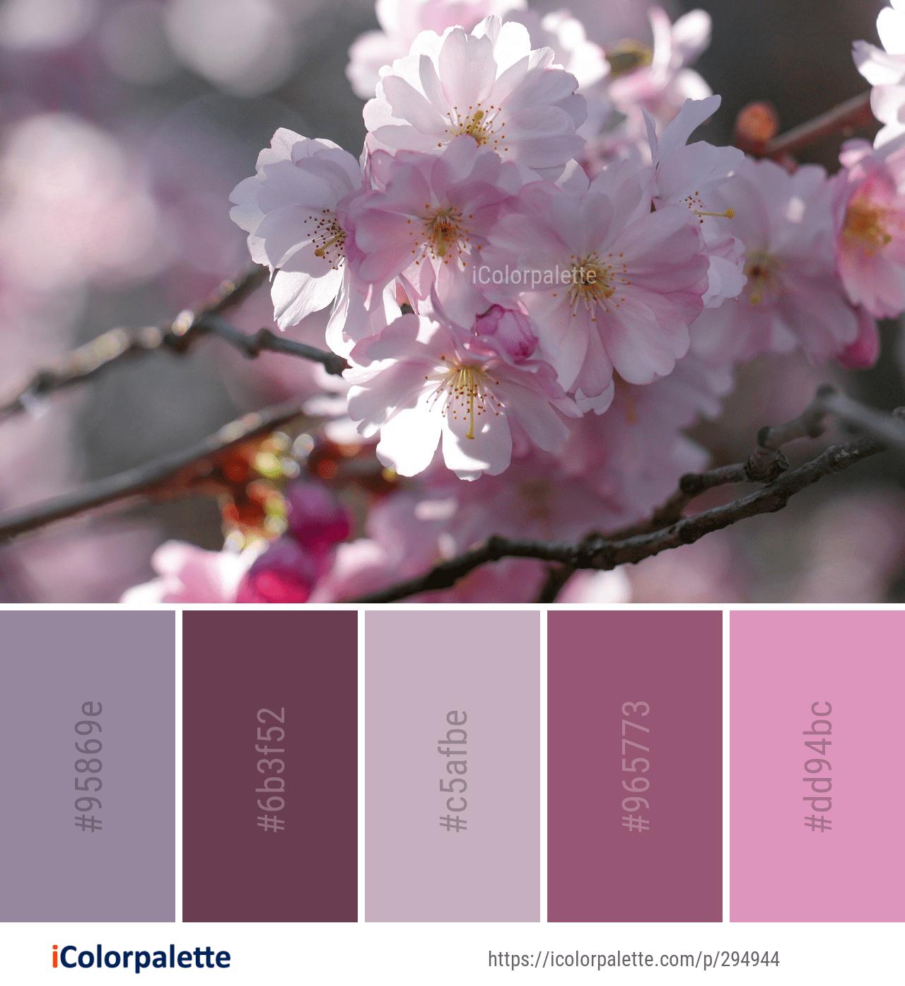 Cherry Blossom Color Scheme Google Search Combinacoes De Cores Paleta De Cores Rosa Cores Leves