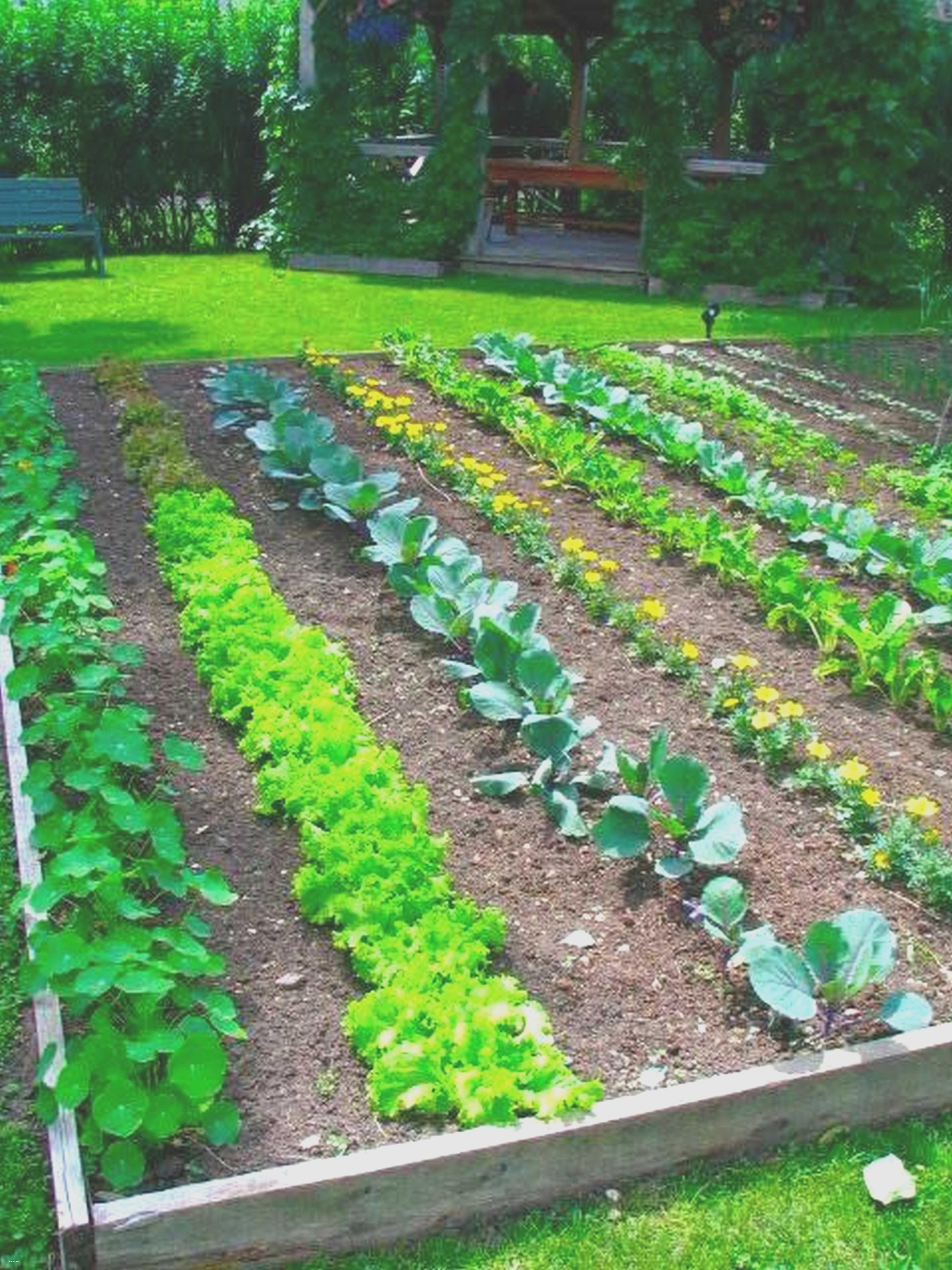 Food Garden Design Fusmun