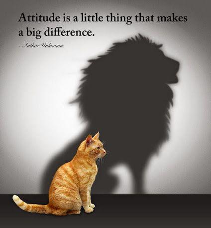 attitude..