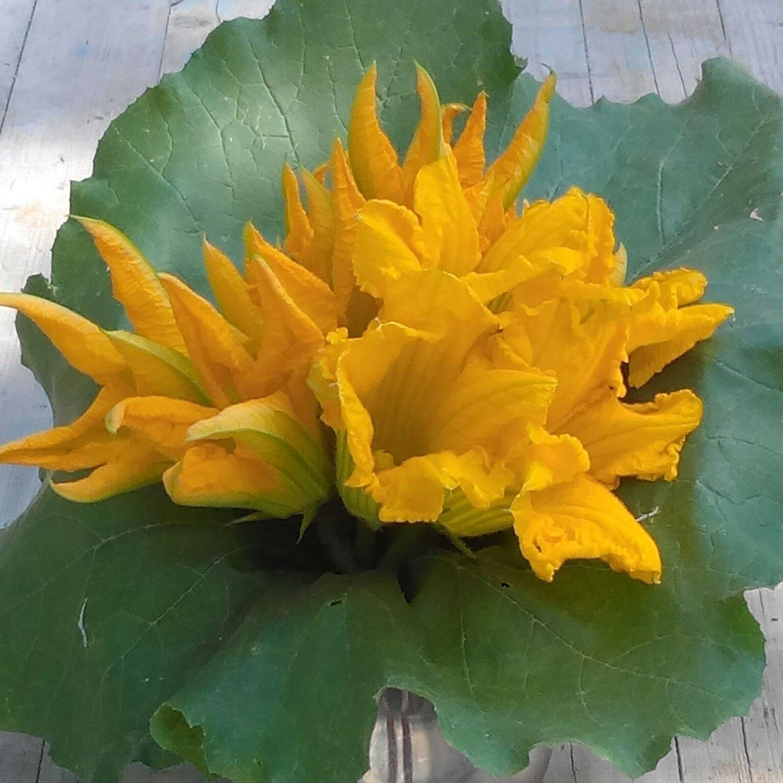 Fiori Di Zucca Bianchi.Fiori Di Zucca Bouquet Flower Fioridizucca Fiori Di Zucca