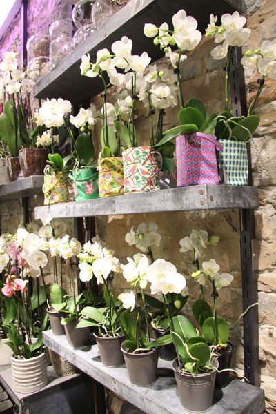 orchid es plantes d 39 int rieur cl sa fleurs pinterest plantes orchid es et arrosage. Black Bedroom Furniture Sets. Home Design Ideas
