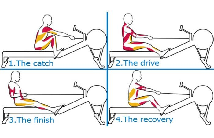 what muscles does the rowing machine work
