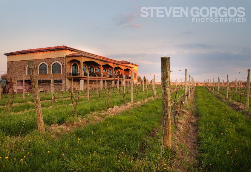 Ventosa Vineyards Geneva Ny Finger Lakes Winery Wedding Seneca Lake