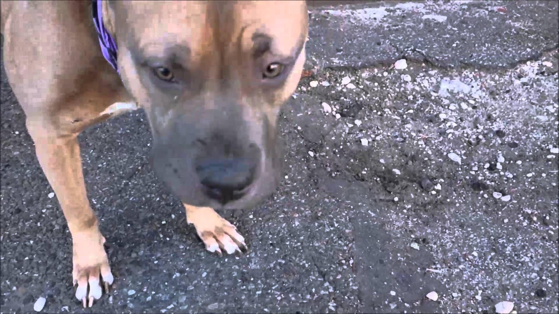 Brooklyn Center DYLAN A0995589 No kill animal shelter