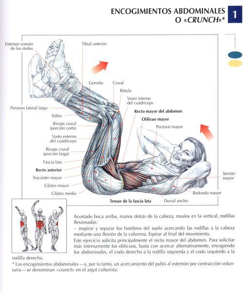 ejercicios de abdominales en el gym