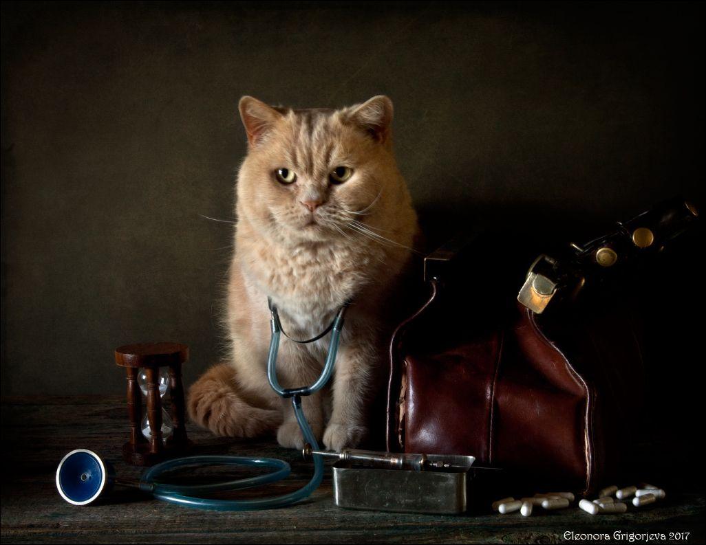 Картинка котик медик