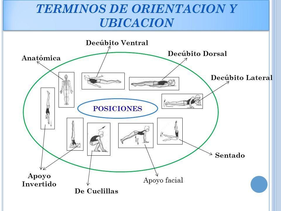 Resultado de imagen de orientacion anatomica | Localización de ...