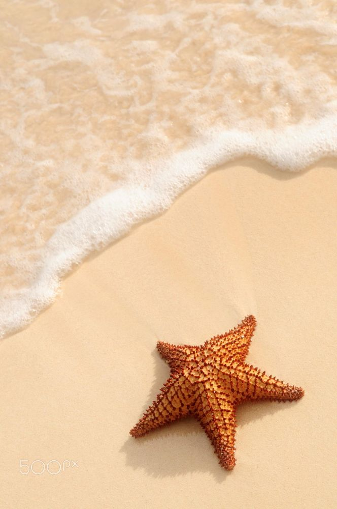 Starfish and ocean wave by Elena Elisseeva on 500px