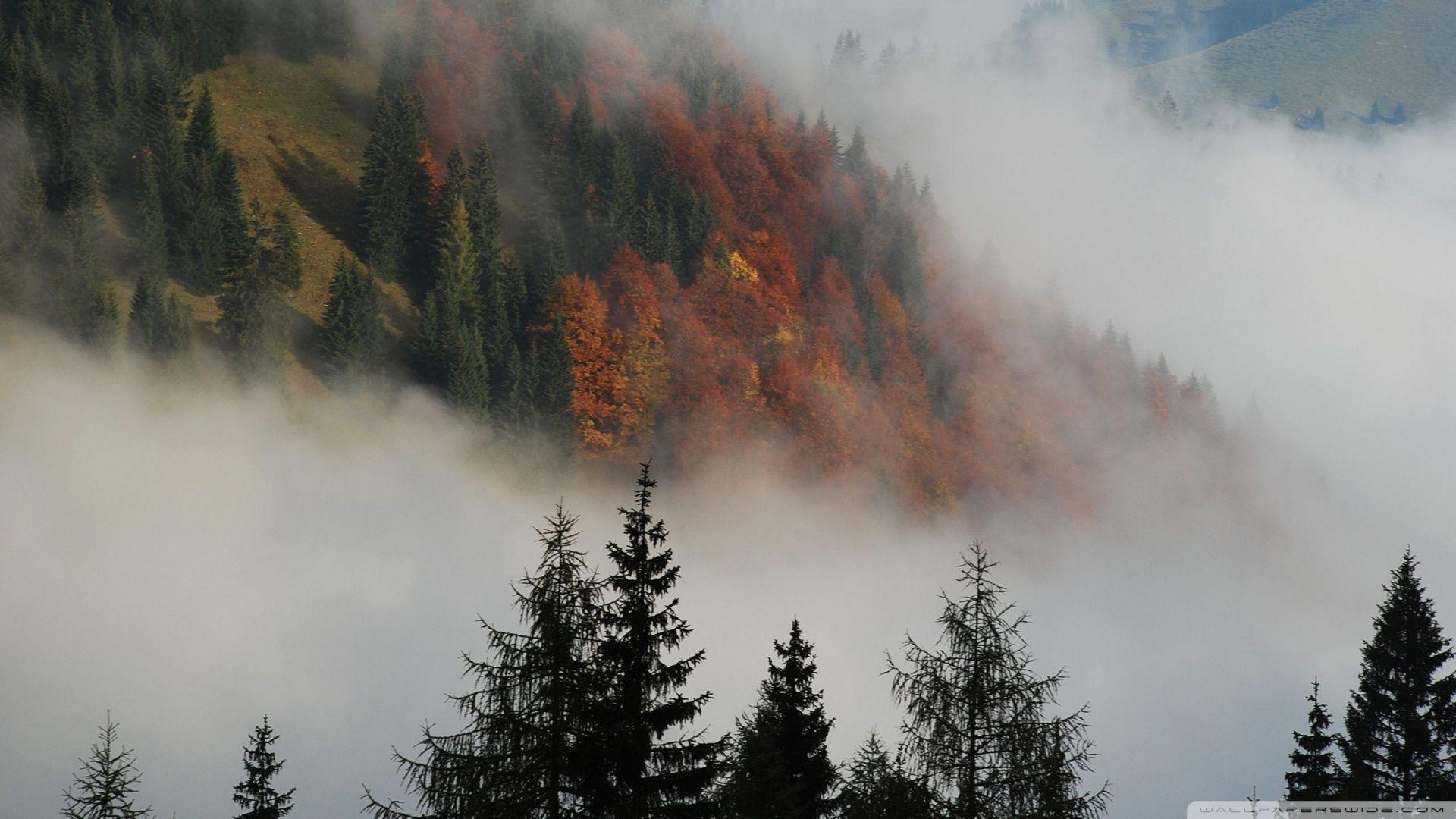 Foggy mountain forest (1920 x 1080) Foggy mountains