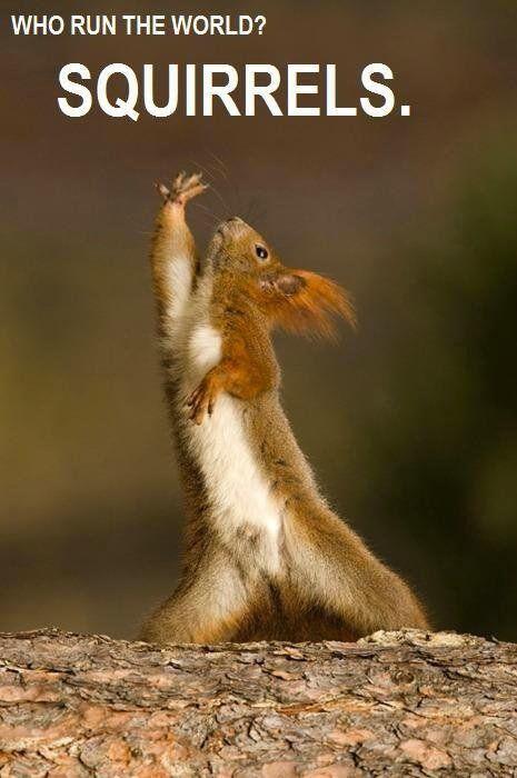 Who runs the world? SQUIRRELS! Haha, I love this :D