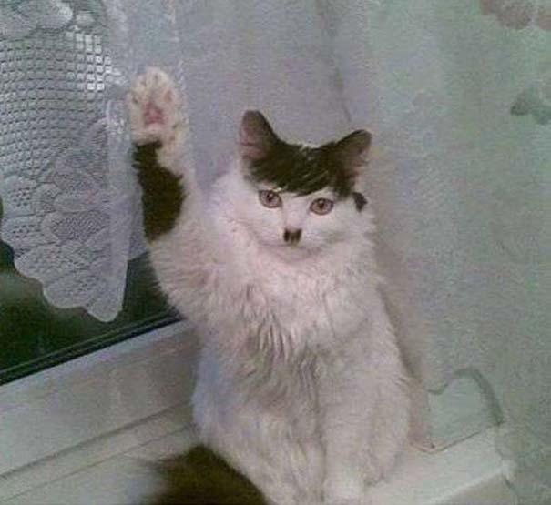 #Hitler #Cat :D