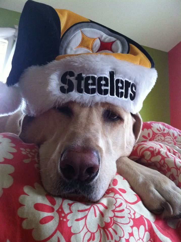 Ultimate Steeler Dog! | Sports | Steelers football, Pittsburgh