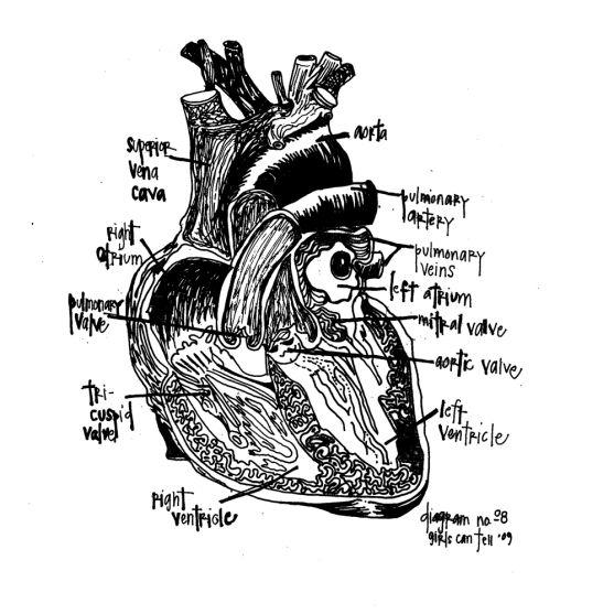 anatomical heart | Diagram design, Hand illustration ...