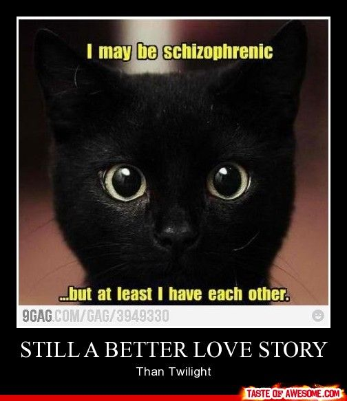 Still A Better Love Story Than Twilight Cat Memes Funny Cat