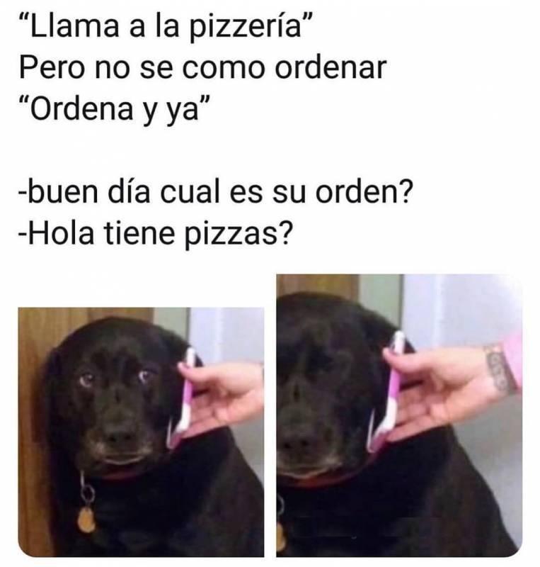 100 Real No Fail Memes De Perros Chistosos Memes Perros Perros Chistosos
