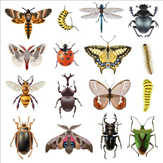Vector Insects huge collection 01