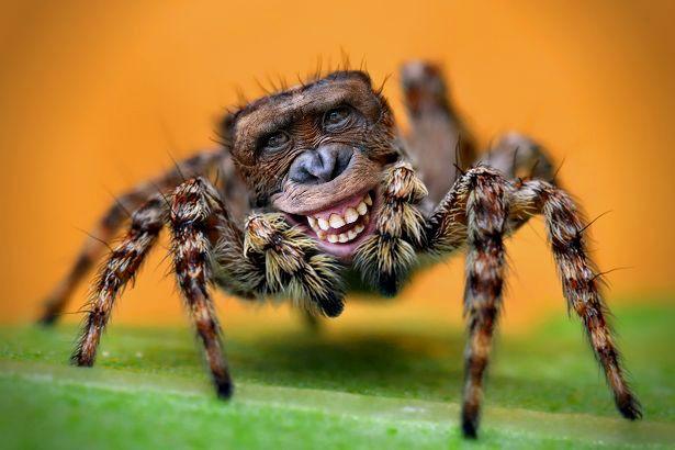 spider monkey | Randy's Freaky Barn (Animal Mash Ups ...