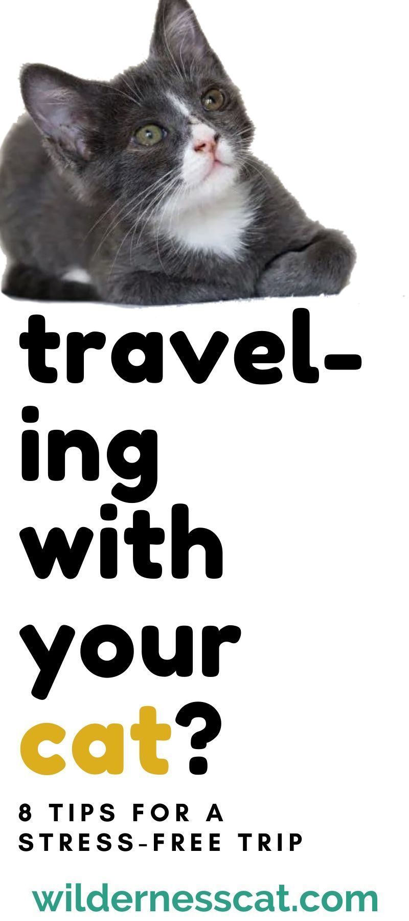 8 Ways We Take the Stress Out of Traveling with Cats in