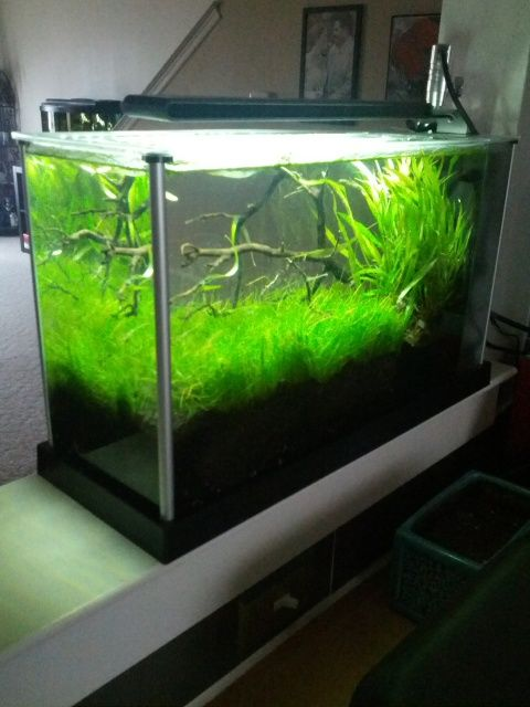 Fluval Spec V thread - The Planted Tank (With images ...