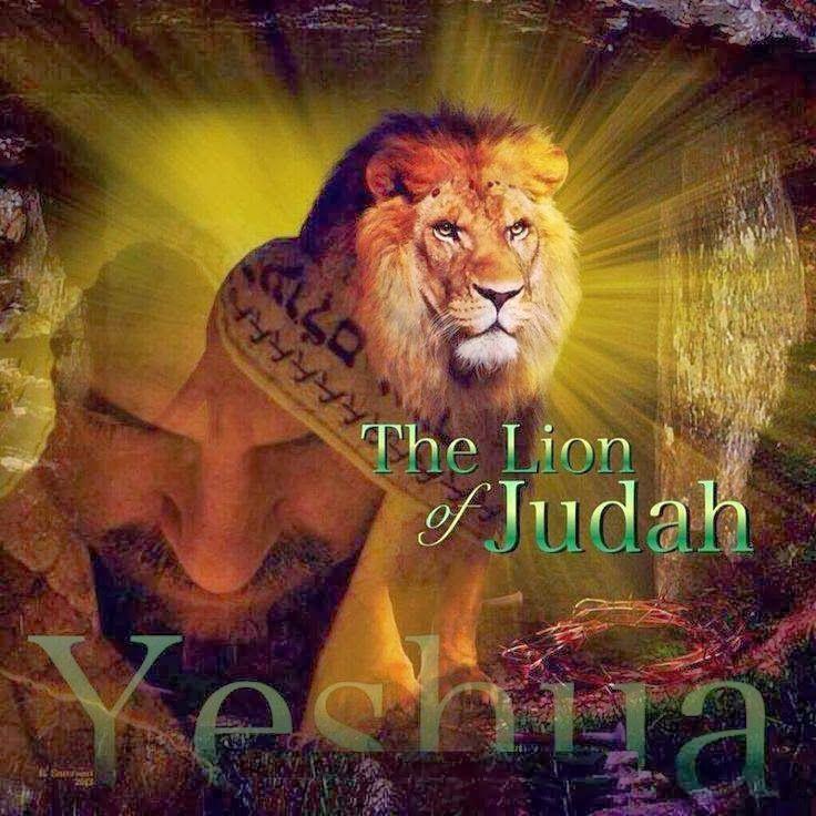 Yeshua Lion of Judah. … | Lion of judah, Tribe of judah, Lion