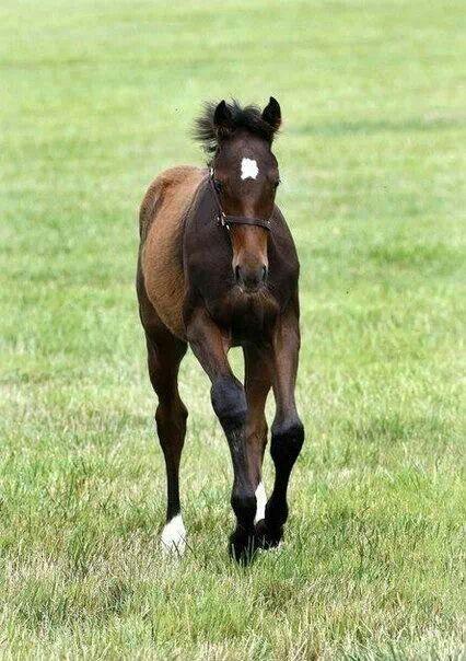 A future Epic Equine. Rachel Alexandra's Bernardini Filly! Born 2/12/13