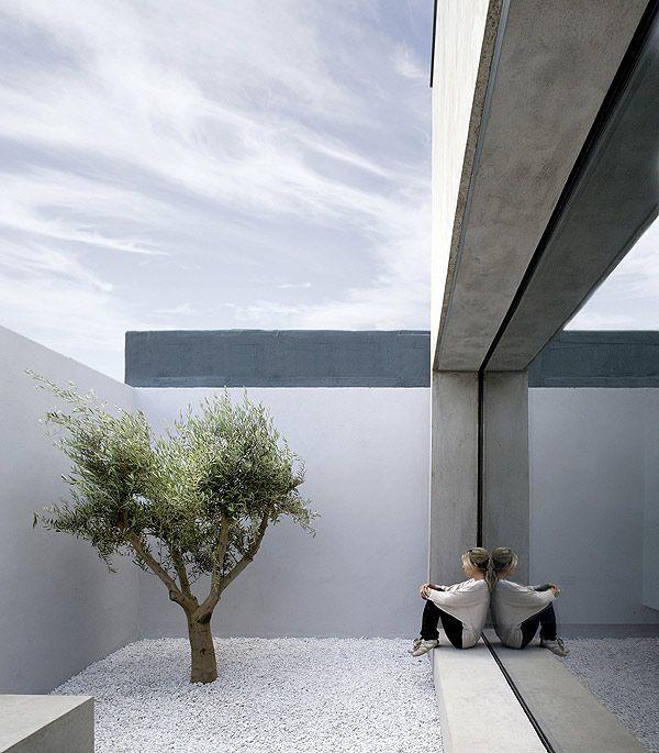 una casa un patio un olivo por odos architects interiores interiores
