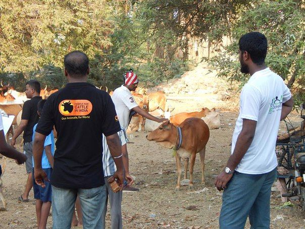 Agni foundation volunteers tagged street cows with a reflector especially for cows on highways with a motive of saving them from accidents. For more information please visit our website http://www.agnifoundation.org Connect us: Facebook – https://www.facebook.com/agnishwarj Twitter: https://twitter.com/AgnishwarJ