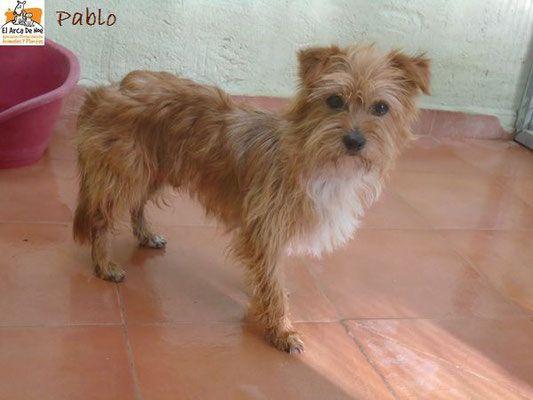 Nos chiens à l'adoption - Site de 4pattessansfrontieres !
