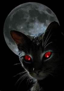 Bing čierna mačička